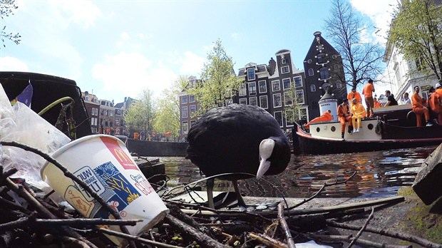 De-film-de-wilde-stad-meerkoet-in-de-gracht